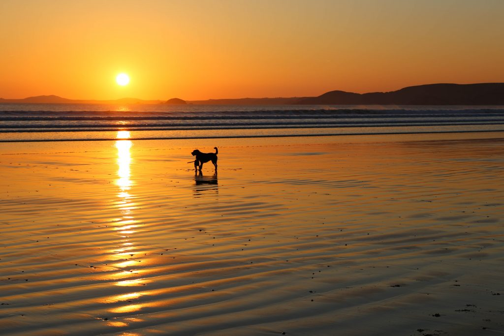 Dogs on Newgale Beach at sunset
