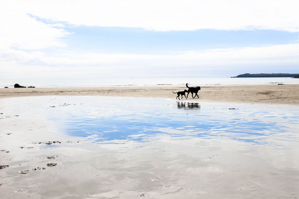 Dogs on Malores Sands beach